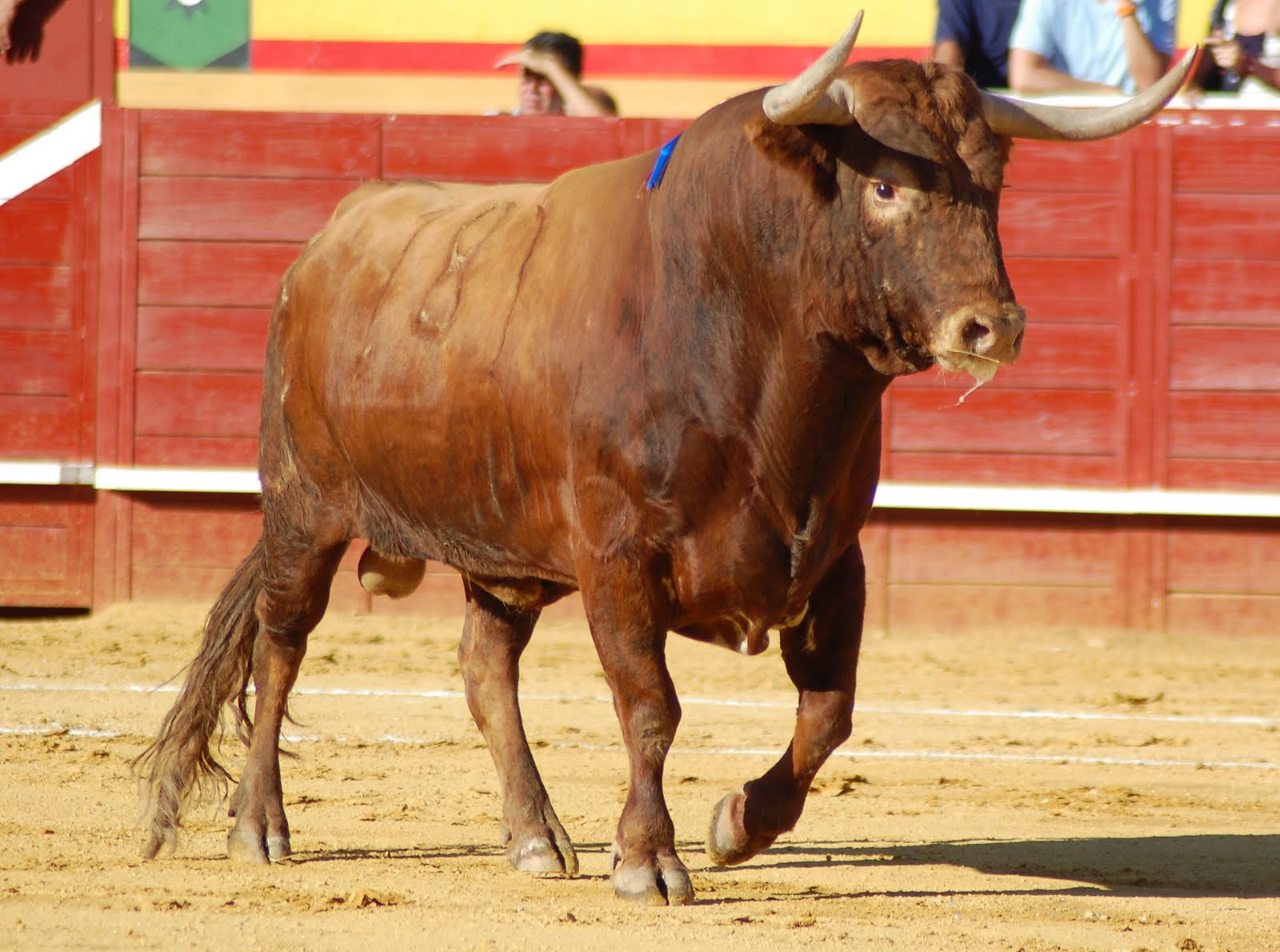 El Toro · Castas y Encastes