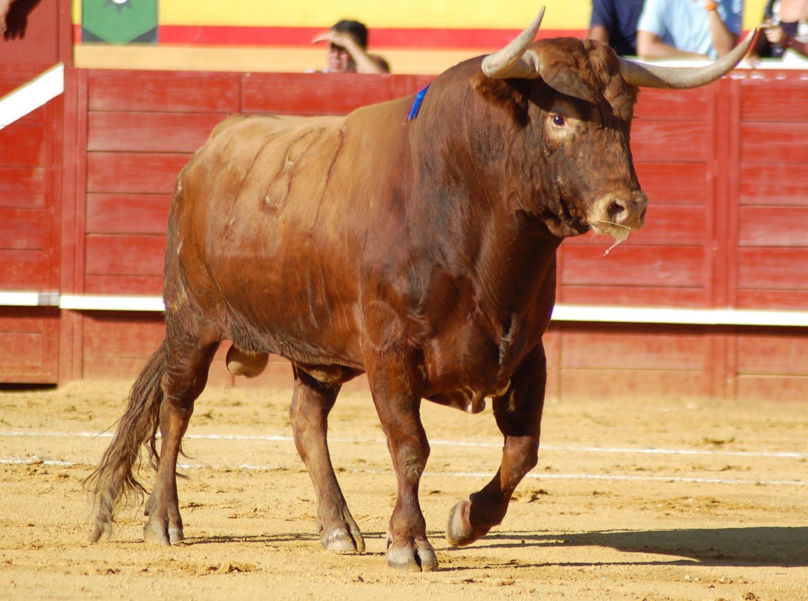 El Toro · Cornamenta