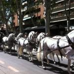 Desfile carruajes 4